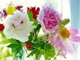 Flowers-peonies