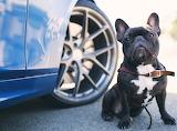 watchdog##1328