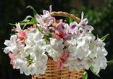 Amazing bouquet-1574863