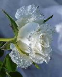 Après la pluie - 2 -