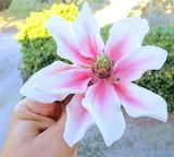 Sugar lily by Lorella Magni