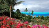 Tropical resort-summer-beach-nature-flowers-landscape-wallpaper