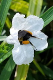 Flowers - Bumble Bee Bum