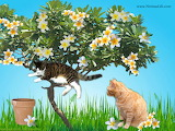The cats and the plumeria.