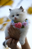 Pretty White Kitten with Flowers