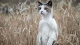 Cat grass standing