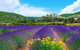 Village, hills, lavender fields, flowers, landscape