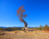 Tough_Little_Gnarled_Tree_by_greenunderground