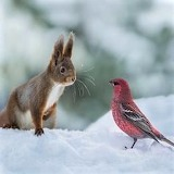 Meeting In The Snow