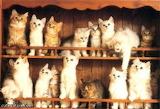 2 shelves of kittens