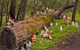 Gnomesville in the Shire of Dardanp in Australia