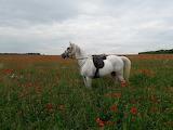 ^ Poppy Field