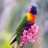 Colorful Parrot...