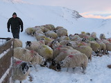 Winter farming in the Yorkshire Dales
