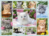 ☺♥ Cute collage...