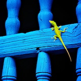 Green Lizard...