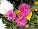 Flowers in villeneuve