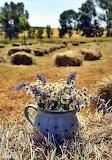 Brocca con fiori