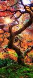 Gnarly Autumn Tree- Pinterest