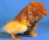 Cute-Kittens-kittens-13247984-536-440