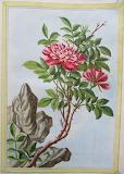 Botanique (1)