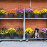 Dog Momo Flowers