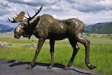 Moose Sculpture National Museum of Wildlife Art Jackson Wyoming
