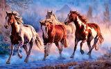 #Painted Ponies