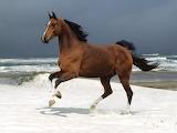 Free-wild-horse