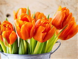 Tulip Arrangement