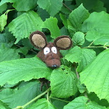 Minimus lurking in the leaves