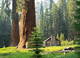 Cabins - Redwood forest