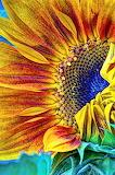 sunflower-abstract-heidi-smith