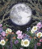 Midnight in the Garden II by EC Mazur