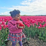 Toddler In The Tulips