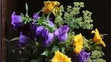 Viola e giallo fondo nero