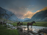 Horses at the mountains