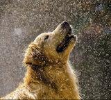 Dog snowflakes