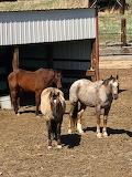 PeeWee, Lynx and Cody