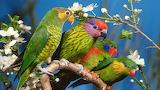 Parrots, tree branch, flowers, colour