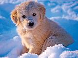 Puppyz