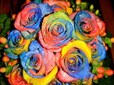 Primavera de Roses - Roses Spring