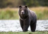 WM Bear 4