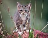 Grey cute cat