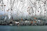 Twigs-