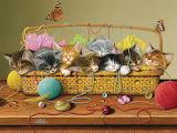 Gomitoli e gatti