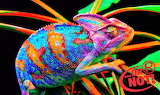 Ripley's Believe It or Not- This is a Neon Chameleon!