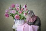 cat, flowers