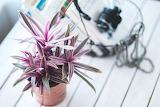 Plant-