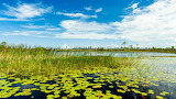 Florida - Everglades